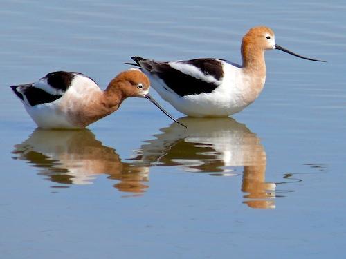 Bay Area Bird Photos