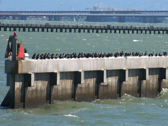 Straight - Cormorants on Breakwater - ©ingridtaylar