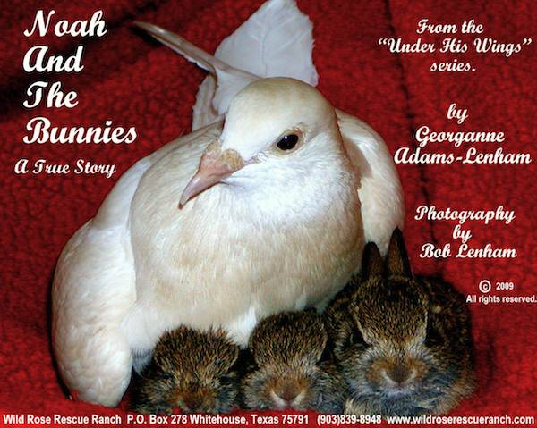 Noah Pigeon and the Bunnies