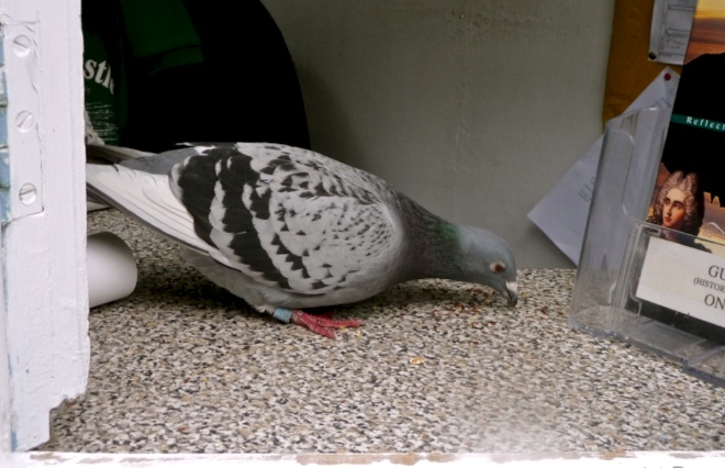 Lancelot-Guinevere: The Case of the Castle Pigeon