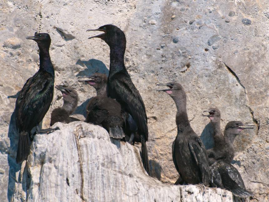 Pelagic Family, On the Rocks