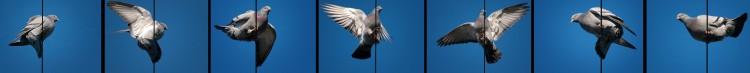 The Flying Wallendas … I Mean, Pijendas