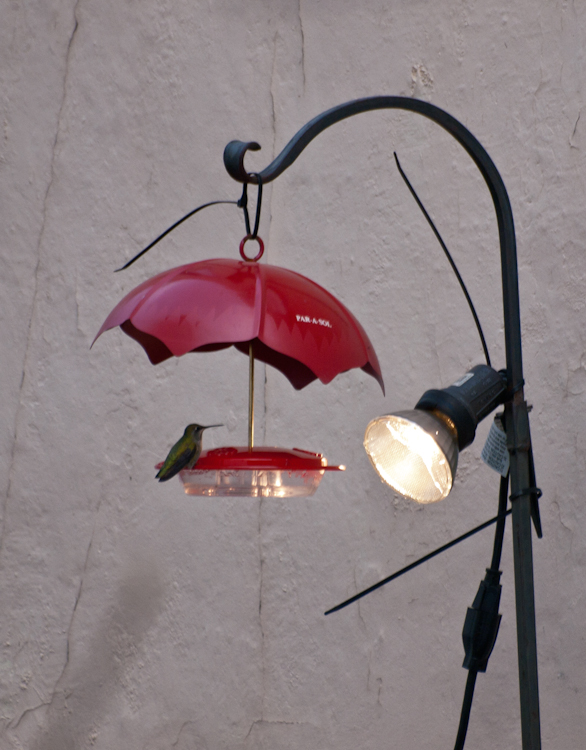 Heated Hummingbird Feeder
