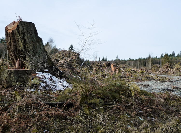 Clear Cut in Skagit County