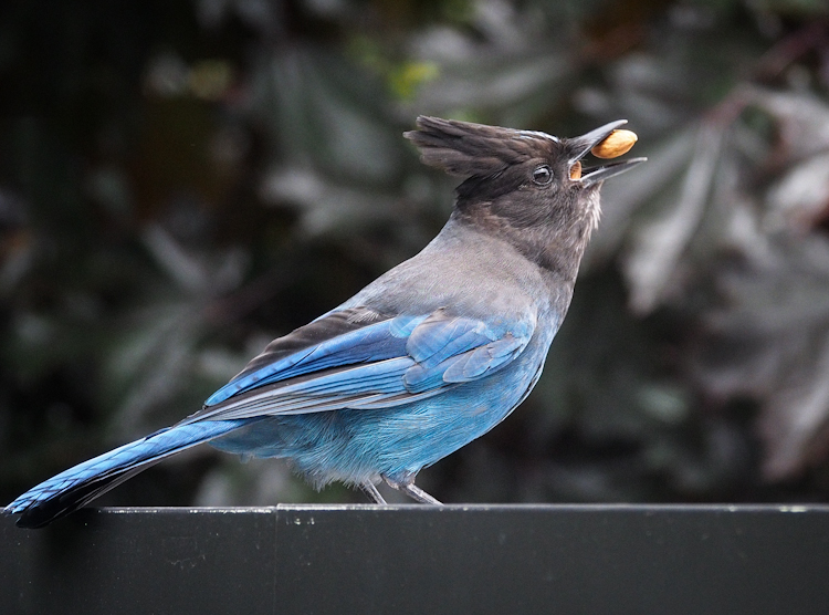 The Caching Benefits of Jays