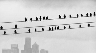 Thumbnail image for Seattle Birds on a Wire