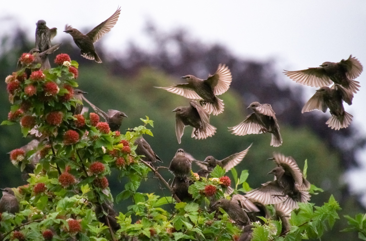 Class of 2012 Starlings - ©ingridtaylar