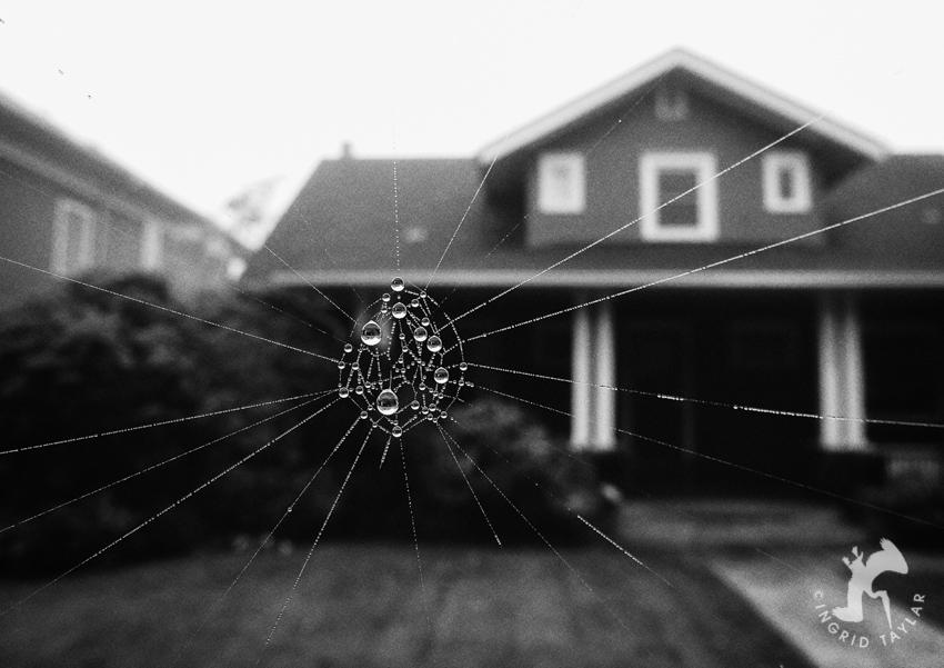 Spider Gateway