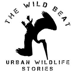 The Wild Beat