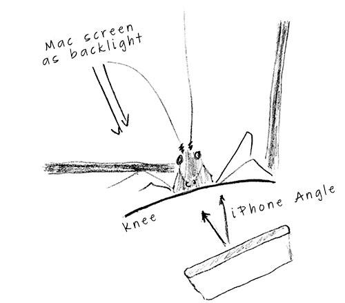 cricketdrawing2