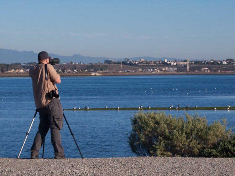 Birder with scope at Bolsa Chica